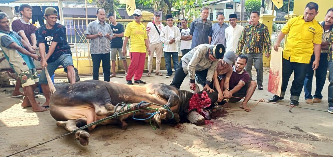 Partai Golkar Bandar Lampung Potong 4 Ekor Sapi